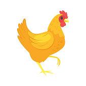 Vector cartoon style illustration of  farm animal - chicken. Isolated on white background.