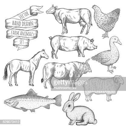 Animali della fattoria impostare. : Arte vettoriale