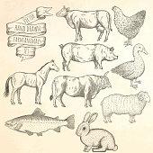 Farm animals set. Hand drawn vector illustration.