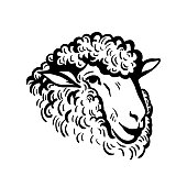 farm animals. sheep head sketch on white background