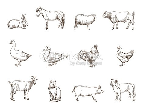 Farm animals vector art