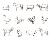 Vector sketch of twelve farm animals silhouette