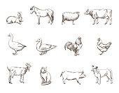 Vector sketch of twelve farm animals silhouette