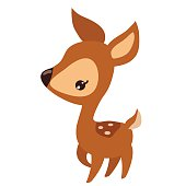 Fawn vector illustration