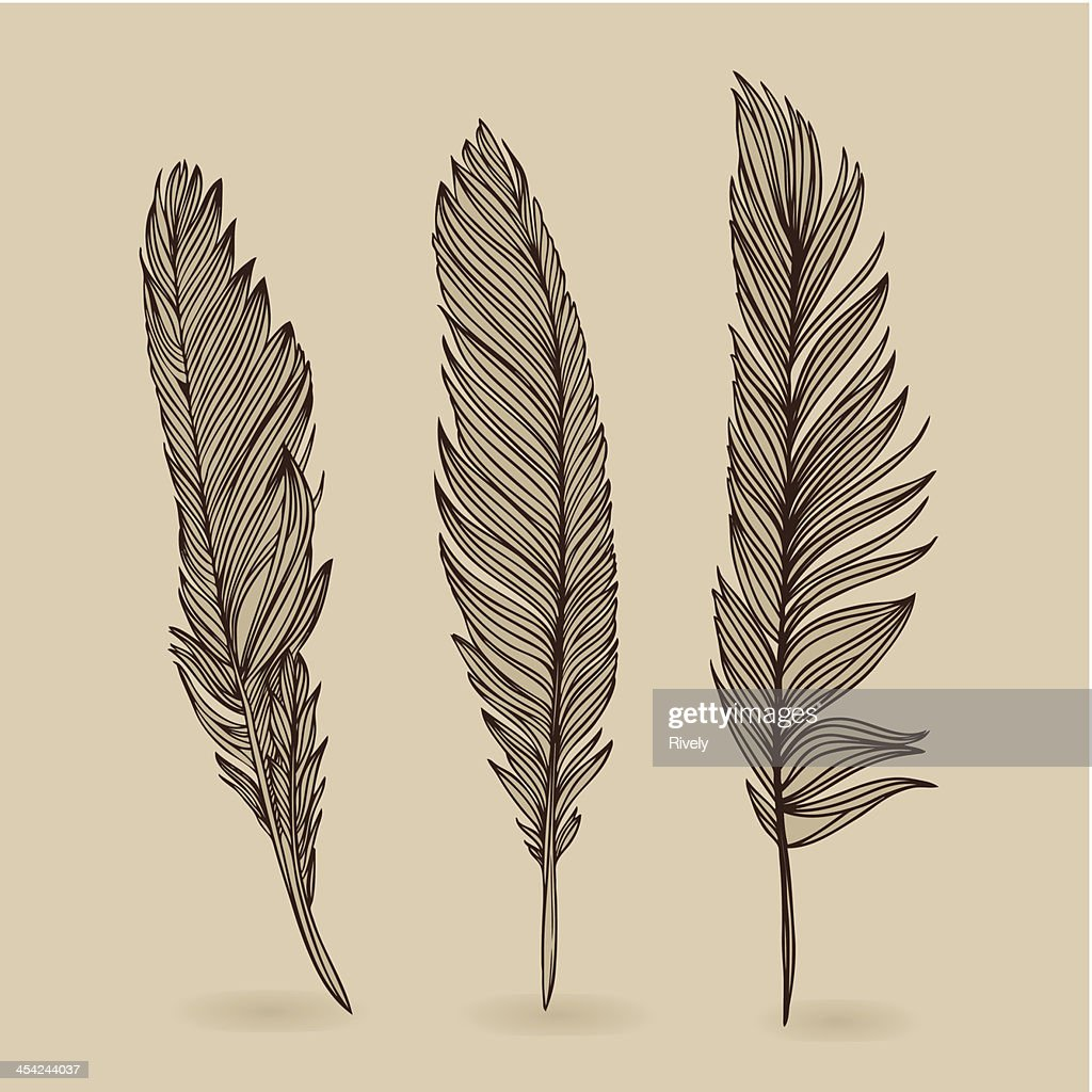 Feathers of bird - vector retro vintage set : Vector Art