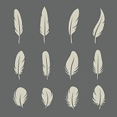 Feathers set on dark background in vector