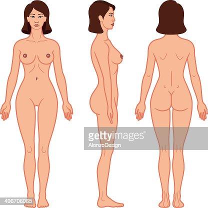 female body vector art | getty images, Cephalic vein