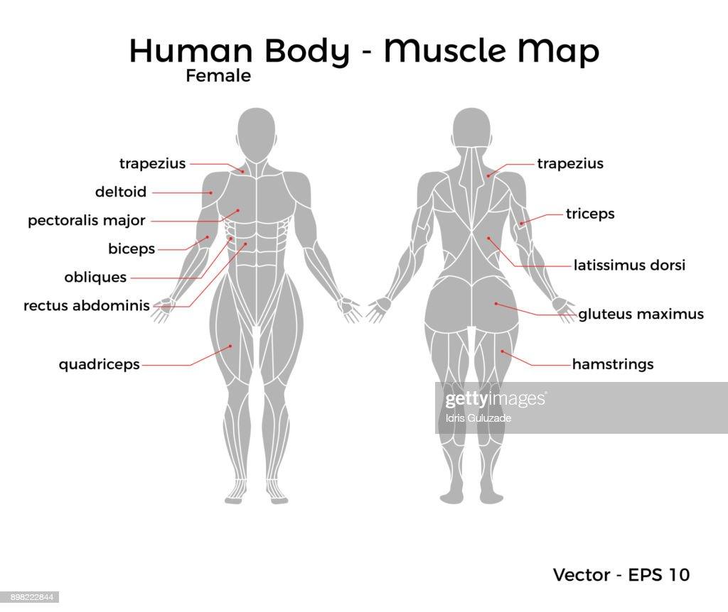 Diagrama Del Cuerpo Humano Femenino - Car Wiring Diagrams Explained •