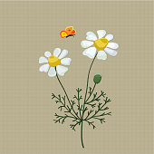Field camomile embroidered with satin stitch on a beige background. Vector illustration