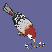 Bird and birdseed
