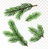 Fir tree branches isolated on transparant background. Christmas vector illustration
