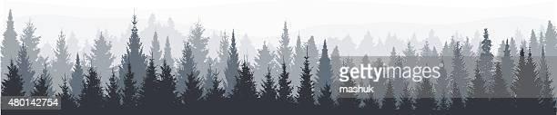 Abeto bosque panorama