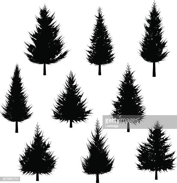 Fir tree silhouette[for Christmas tree]