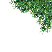 fir-tree branches- festive design. Close-up. Isolated. Christmas. New Year.   Vector Illustration .Eps 10.