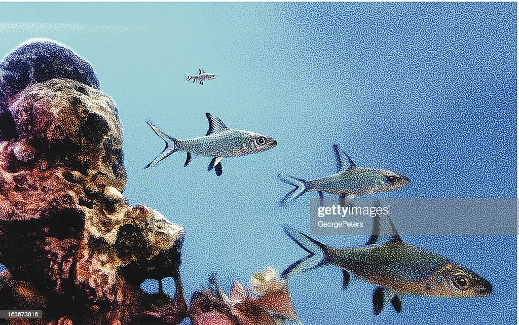 Fish And Reef : Vector Art