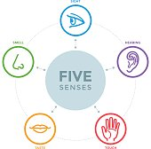 Five senses with complex line icons in a mind map design