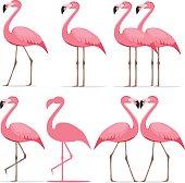 Flamingo, a set of pink flamingos. Flat design, vector illustration, vector.