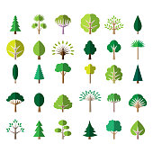 Flat tree icons. Pine and palm, oak and ash vector illustration