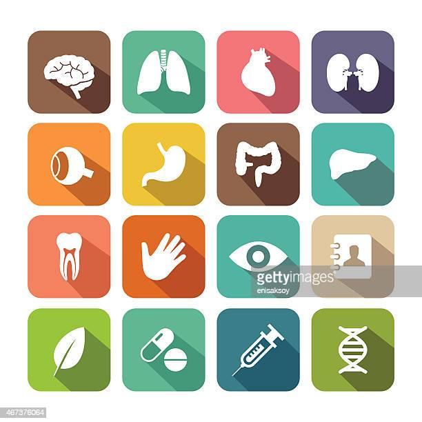 Flat Healthcare and Organ Icon Set