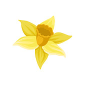 Icon of daffodil. Narcissus with bright yellow petals. Spring flower. Colorful graphic element for botanical book, greeting card or textile. Flat vector illustration isolated on white background.