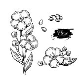 Flax flower and seed vector superfood drawing set. Isolated hand drawn  illustration on white background. Organic healthy food. Great for banner, poster, label
