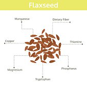 flaxseed nutrient of facts and health benefits, info graphic seed, food vector