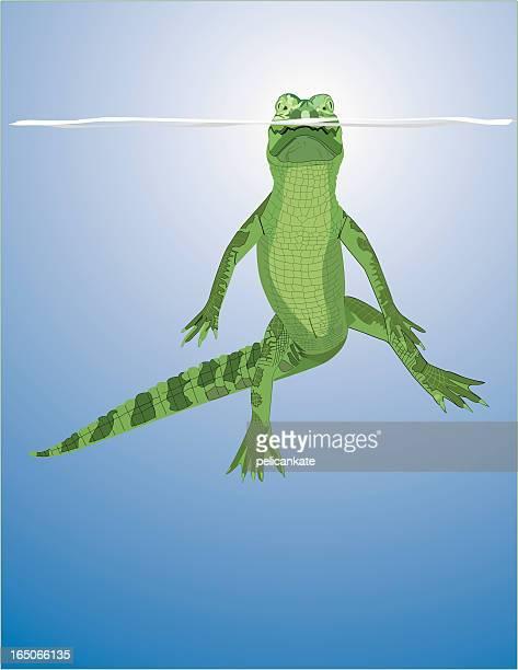 Floating Gator