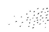 flying birs silhouettes