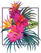 Bouquet with hibiscus and bird of paradise flowers with pink petals, tropical leaves, and floral elements on the white background. Watercolor with summer garden and wild flowers. design frame with vec