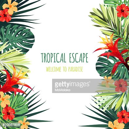 Floral square postcard design with guzmania and hibiscus flowers, monstera and royal palm leaves. Exotic hawaiian vector background : stock vector