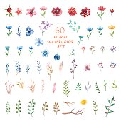 Floral decor set. 60 different vector and decor elements for design. Isolated.