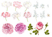 Vector flower elements set isolated on white background