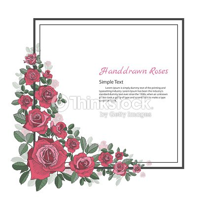 Flower Frame Of Rose Drawing And Sketch On White Background Vector ...