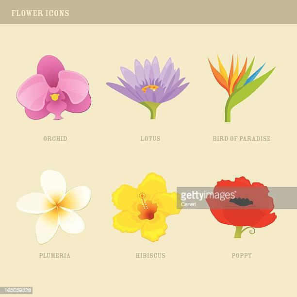 Blume Symbole: Orchid, Lotus, Bird of Paradise, Plumeria, Hibiskus, Poppy