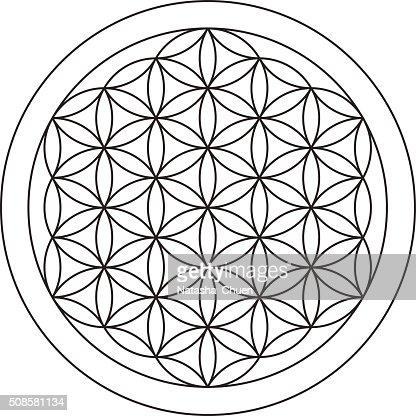 Flower of life. Sacred geometry. : Vector Art