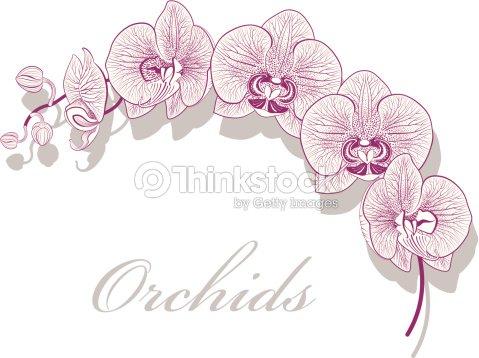Fleur dorchid e clipart vectoriel thinkstock - Dessin d orchidee ...