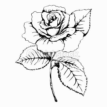 flor rosa desenho e pintura mão desenhar branco broto pétala