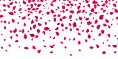 Flowers petals falling on vector white background. Wedding, Valentine or Women day pink blossoms flying in wind whirl backdrop