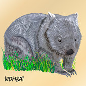fluffy young motley wombat on the grass, isolated, on a light beige background