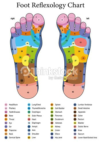 Foot reflexology alternative acupressure and physiotherapy health alternative acupressure and physiotherapy health treatment zone massage chart with colored areas numbering and listing of names of internal organs and ccuart Image collections