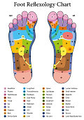 Foot reflexology. Alternative acupressure and physiotherapy health treatment. Zone massage chart with colored areas. Numbering and listing of names of internal organs and body parts.