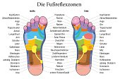 Foot reflexology chart with accurate description (german labeling!) of the corresponding internal organs and body parts. Vector illustration over white background.