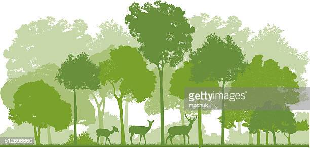 forest and deer family
