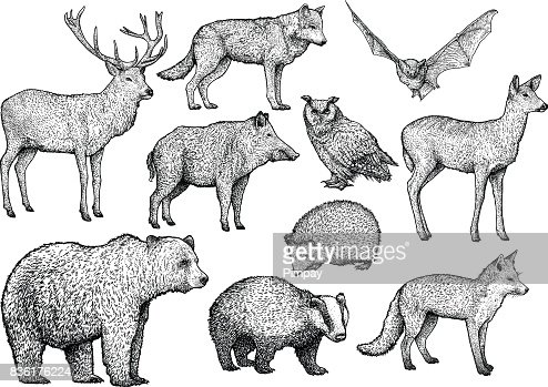 森林動物イラストレーション、ドローイング、彫刻、インク、ライン アート、ベクトル : ベクトルアート