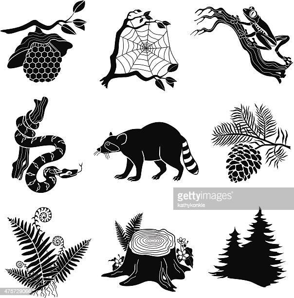 forest animals, plants in black and white