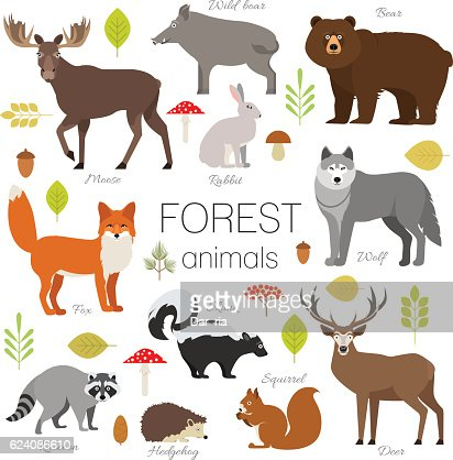 Forest animals set isolated vector. Moose, bear, fox, wolf, skunk : Arte vettoriale