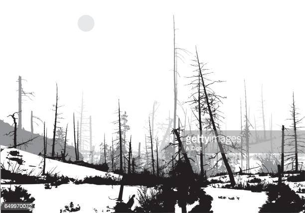 Forest Fire Winter