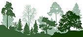 Forest green trees silhouette. Nature, park. Vector background