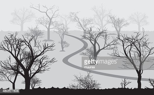 forest in the dark and road, trees silhouettes : Vector Art