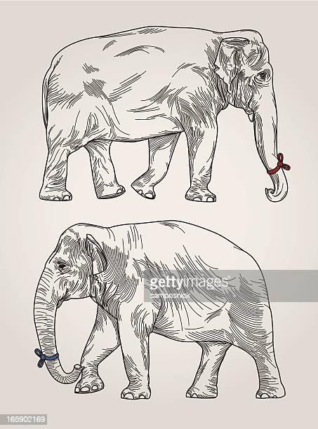 Arte vectorial y gráficos de Dos Animales | Getty Images